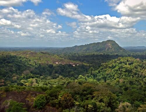 Vlaams Parlement wil strijd tegen ontbossing Amazonewoud verscherpen